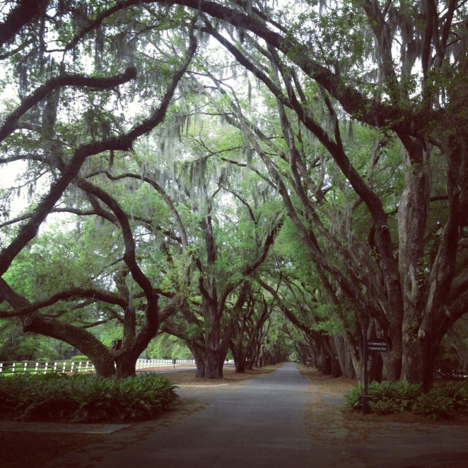 belfair entrance, avenue of the oaks